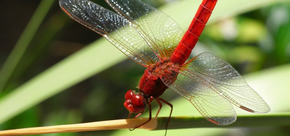 Exploration group creates joint supports, by dragonfly wings, for sports and medication propelled